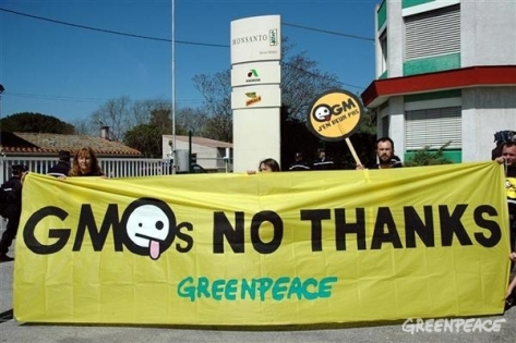 greenpeace against gmo