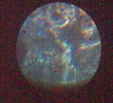 vlc/wetelux/kosmos60x150x400x/6fachLochblende/terracamUSB/unbekannte partikel auf objektträger
